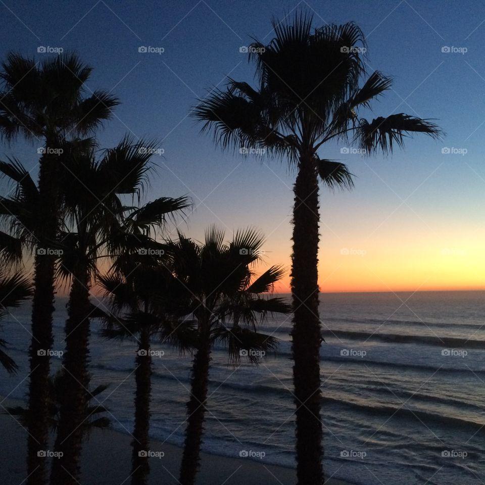 Palmy sunset.