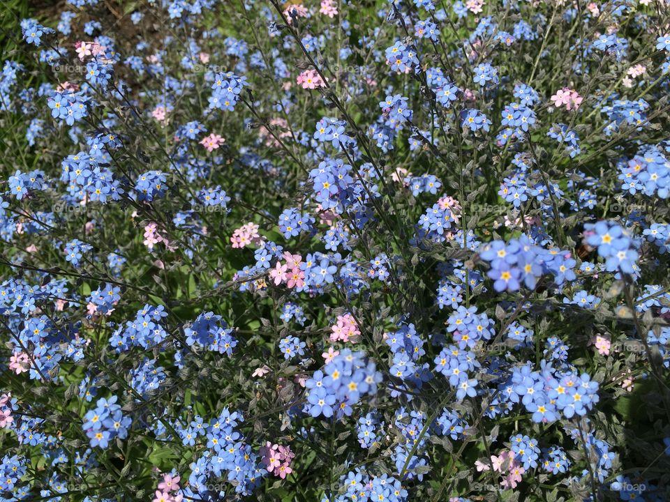 Field of bright flowers
