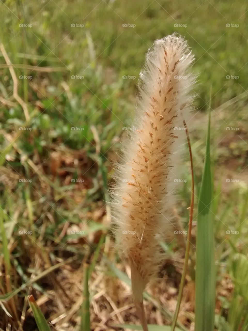 very beautiful grass looking for flower like