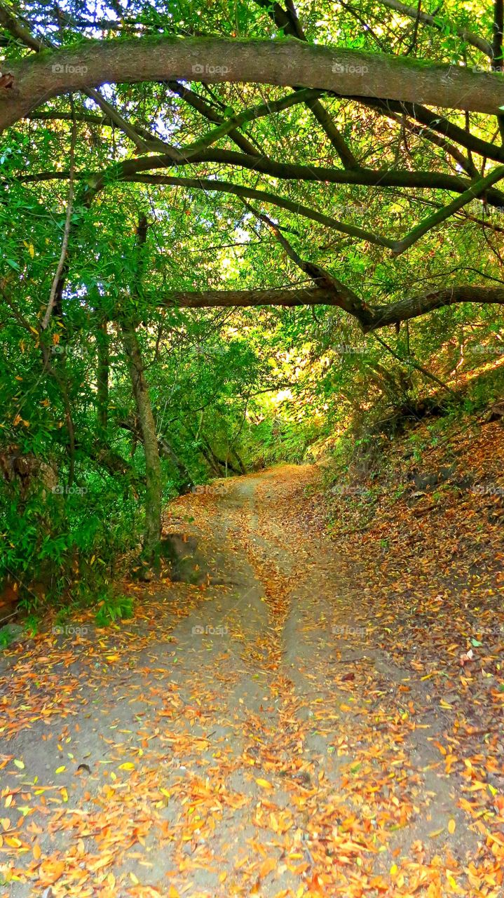 Off the beaten path . Hiking on a tranquil path in the Bay Area hills.