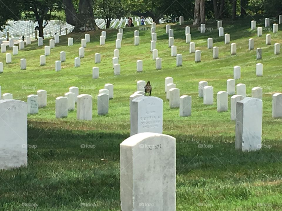 The fallen of Arlington