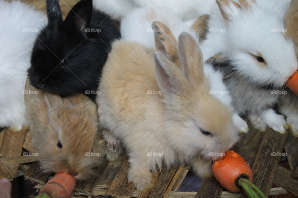 Rabbits eat carrots. My son told me that the eyes of the rabbits are red because they ate the carrots.