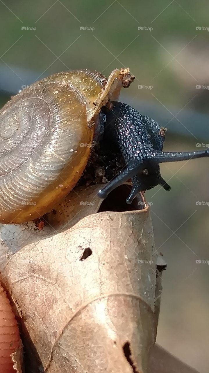 Invertebrate, Snail, Shellfish, Slow, Gastropod