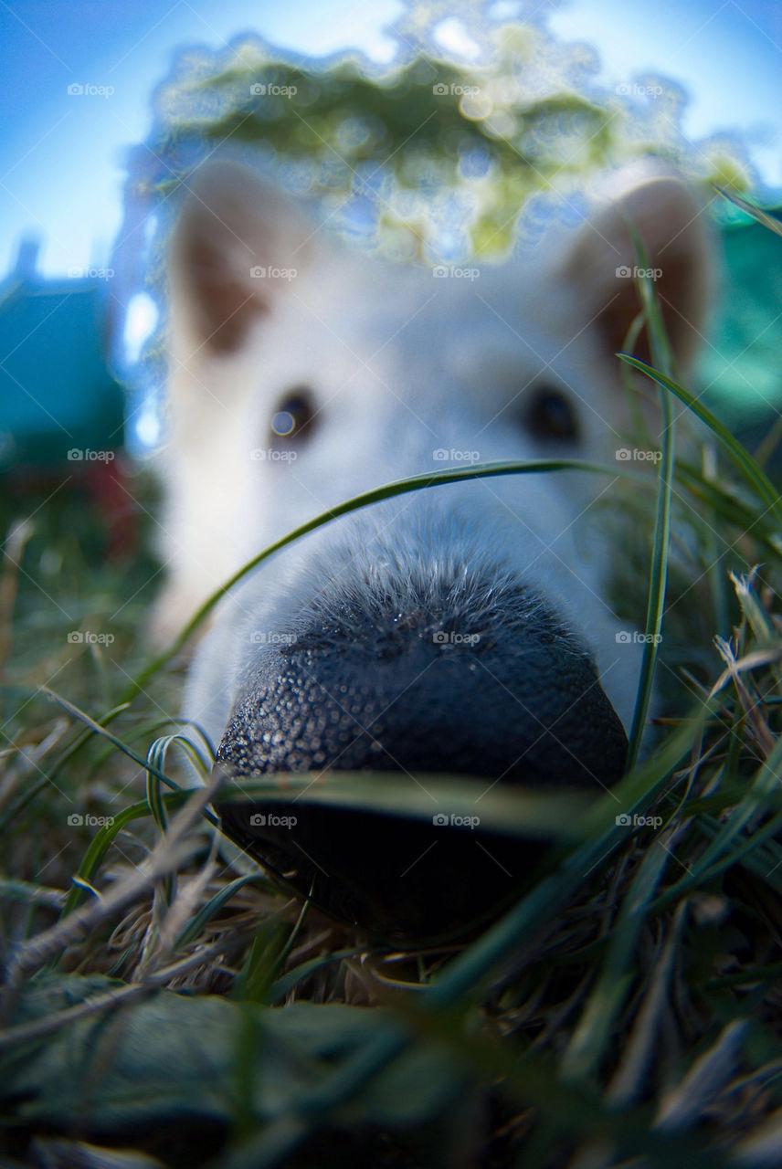 white grass dog nose by munda.net