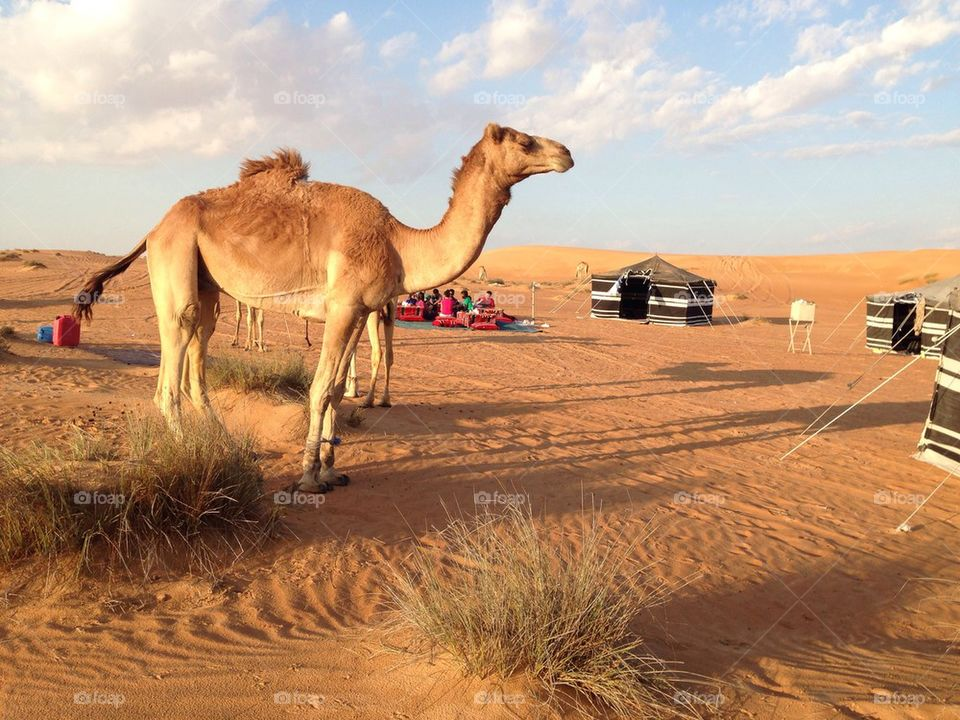 Camping in the Omani desert