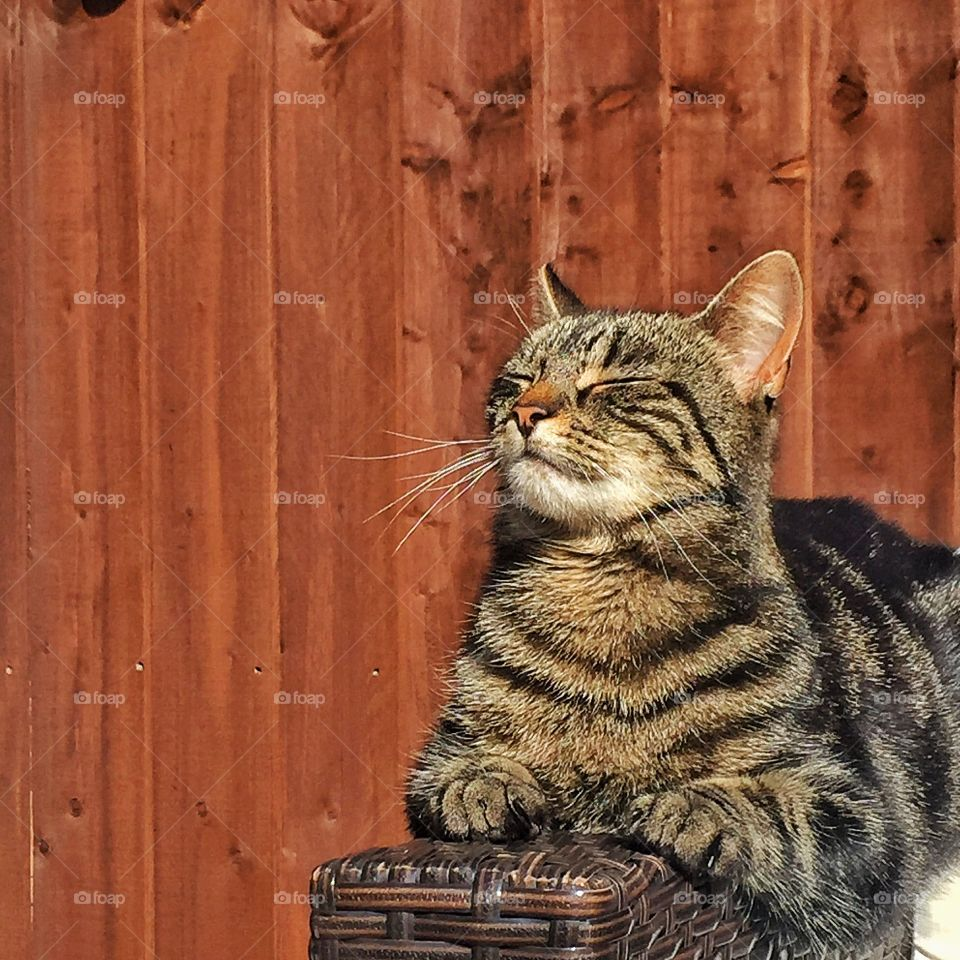 Front view of a cat sitting outdoors eyes closed