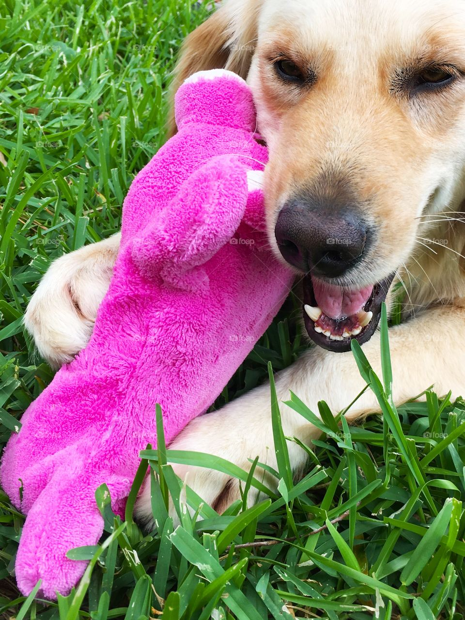 Puppy and pink toy