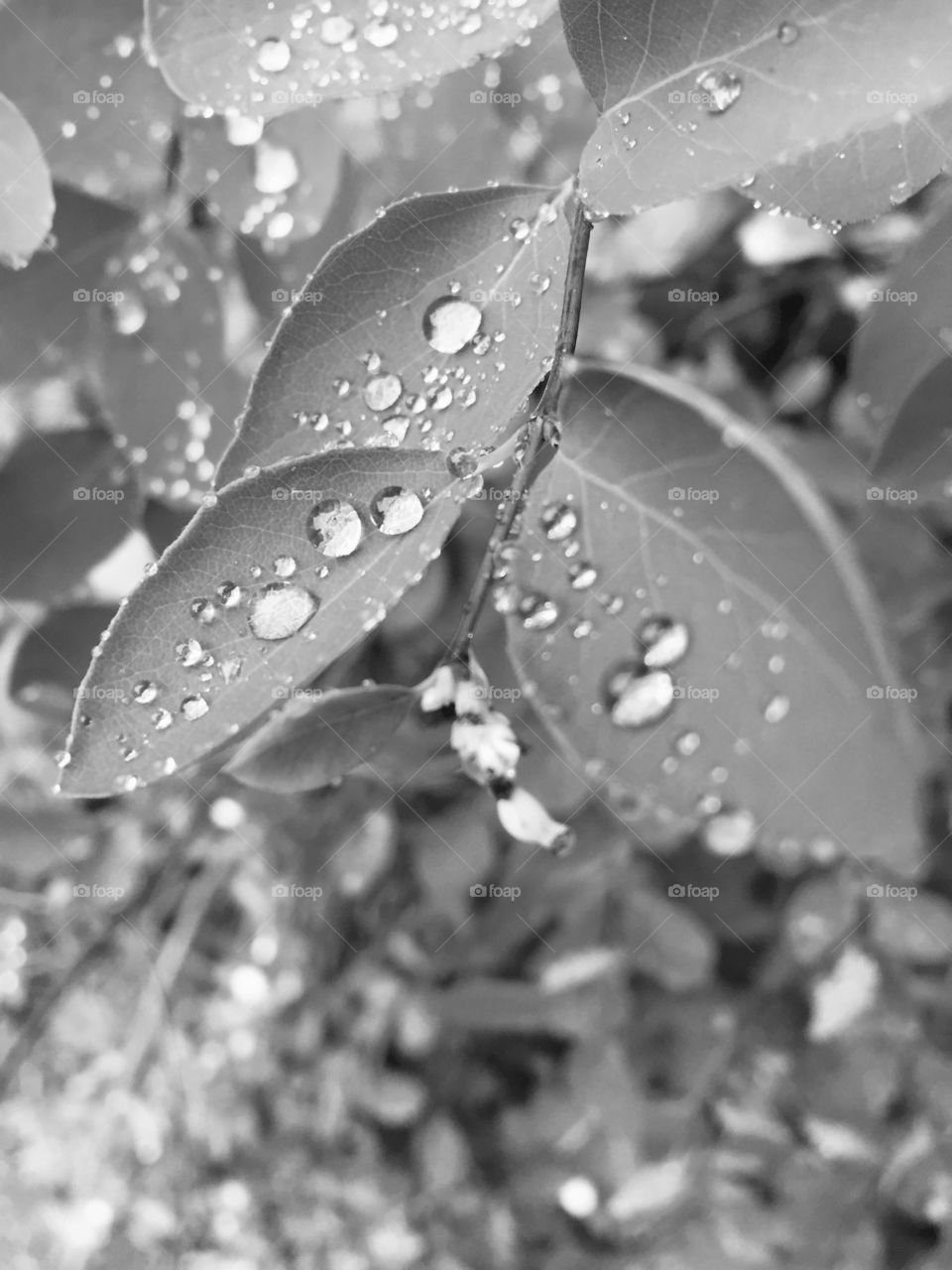 Waterdrops on leaves in close up