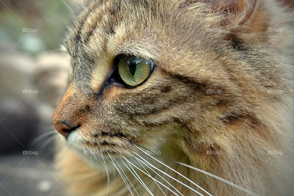 Close-up of cat's eye