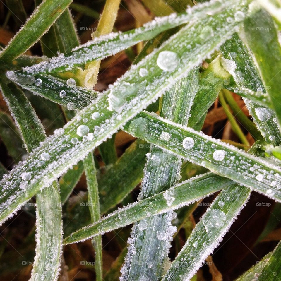 Blades of grass with ice droplets