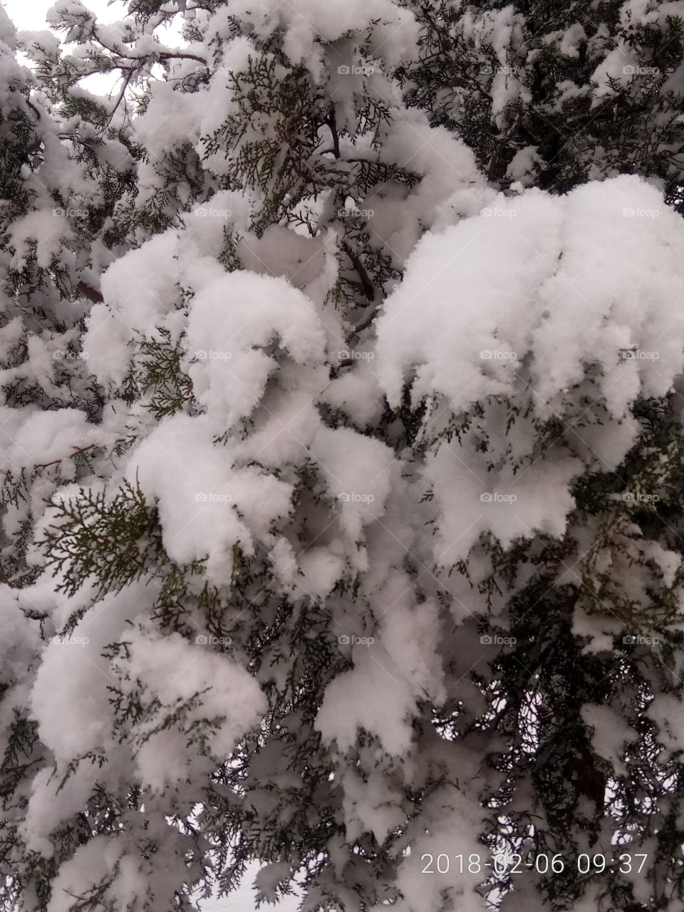 No Person, Nature, Winter, Tree, Outdoors