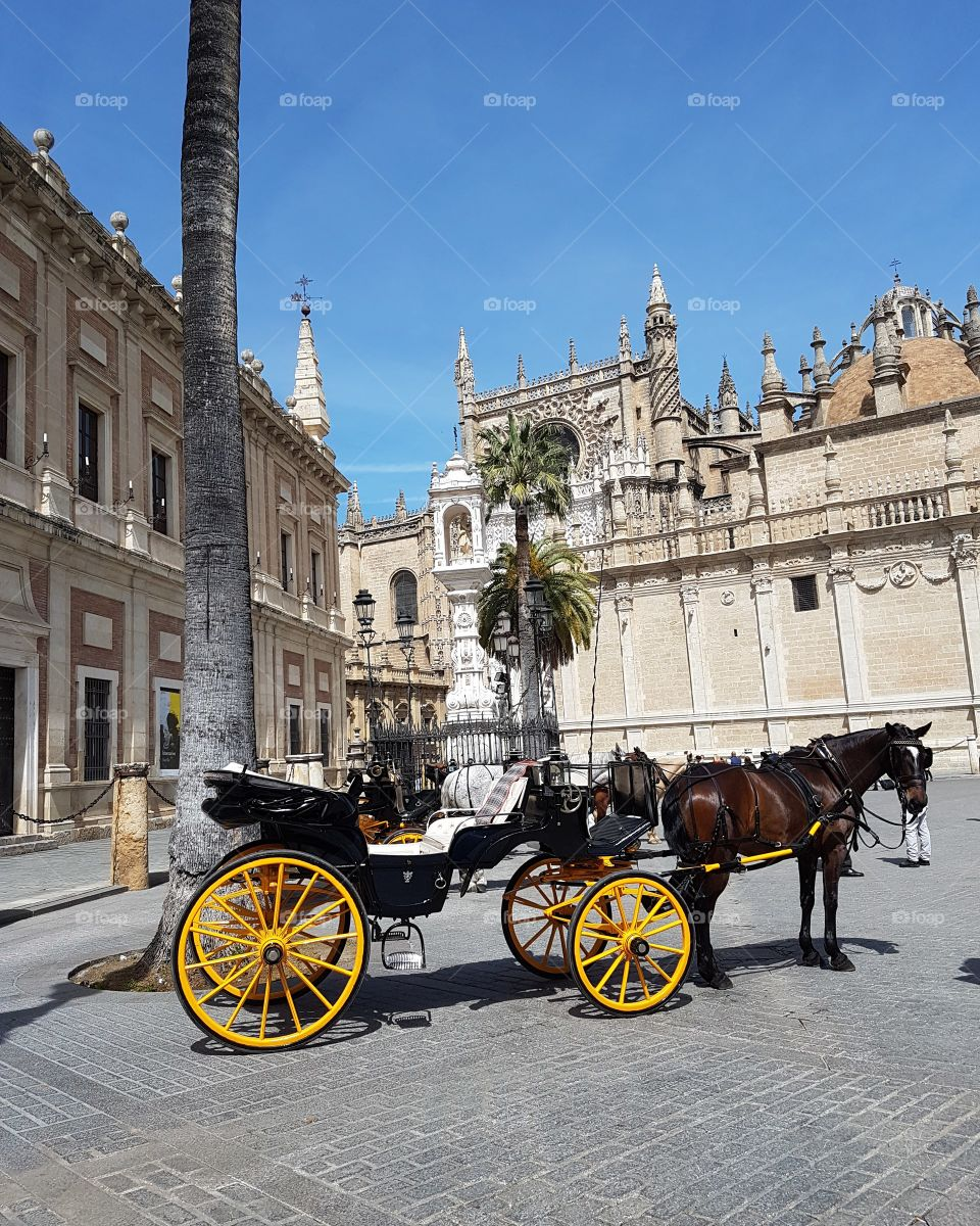 Horse and cart in Seville Spain