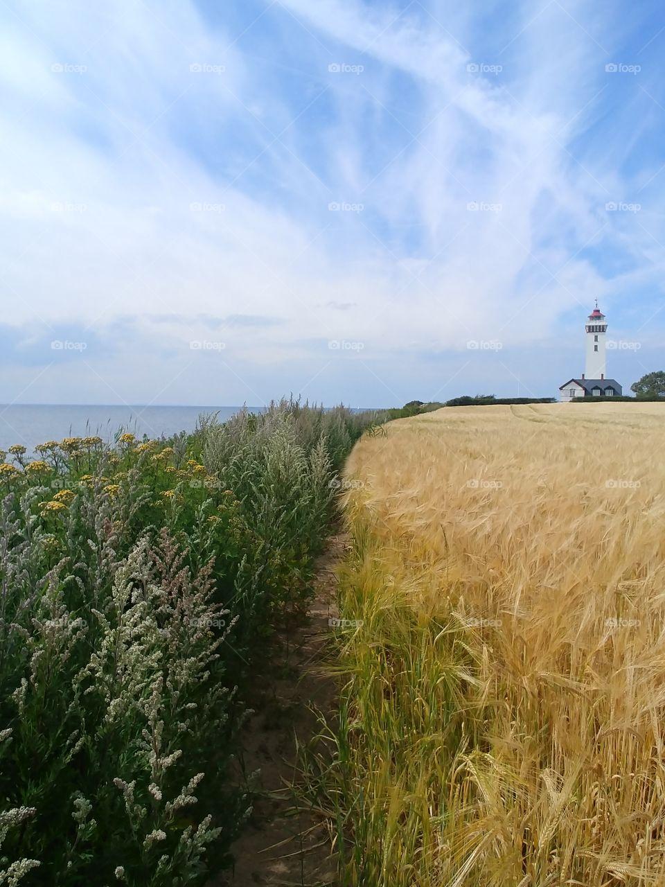 lighthouse Leuchtturm feld summer Sommer Gras green gold gelb yellow Ernte weizen sky. holiday ferien water meer küste countryside farm