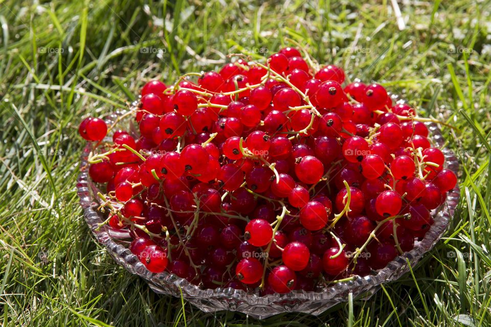 Red currant on glass dish placed in the grass