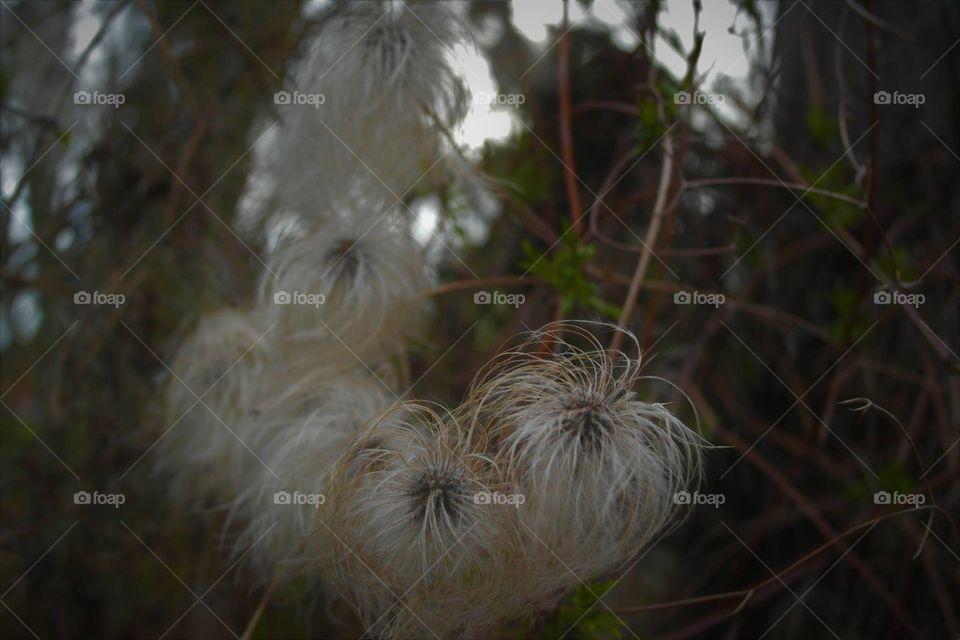 Natur ourdoor