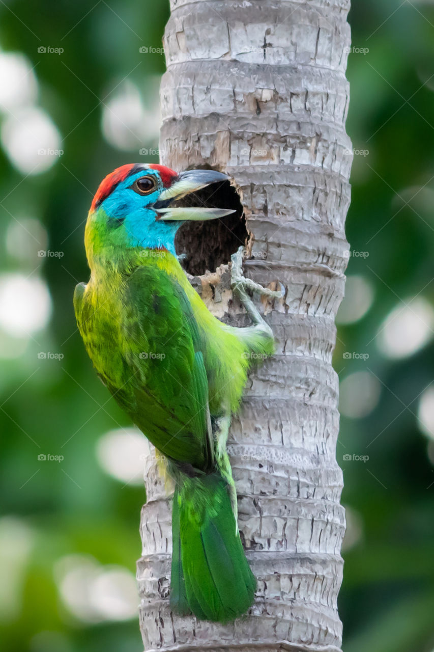 Birds are the beautiful creation of mother nature & live so closer to nature compare than human. Every bird has its unique colour & features which makes them so eye catching & beautiful.