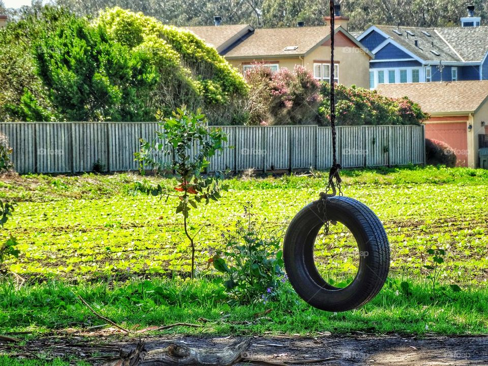 Tire swing on a lazy summer afternoon