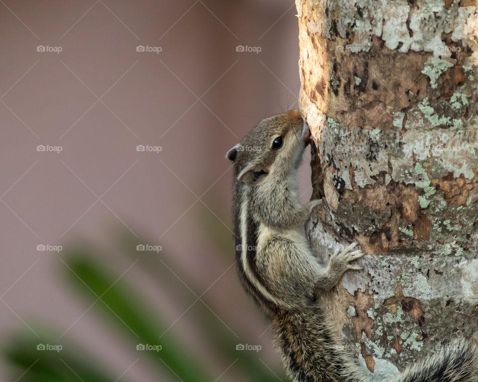 So cute squirrel