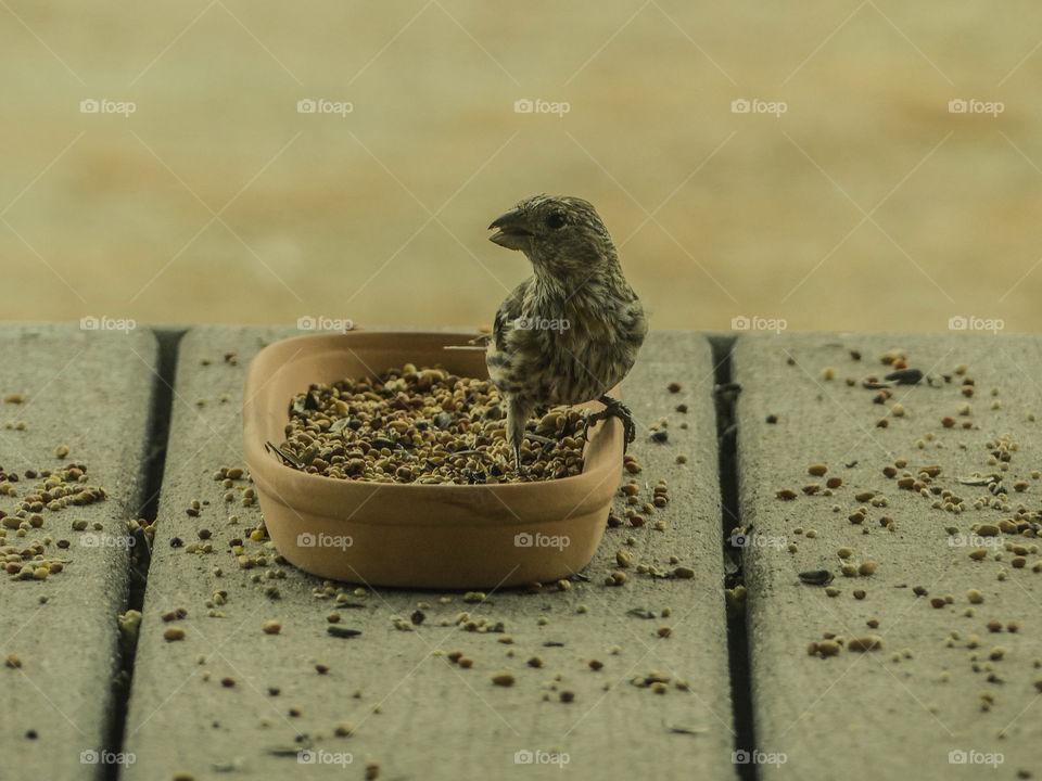 Wild bird on food container