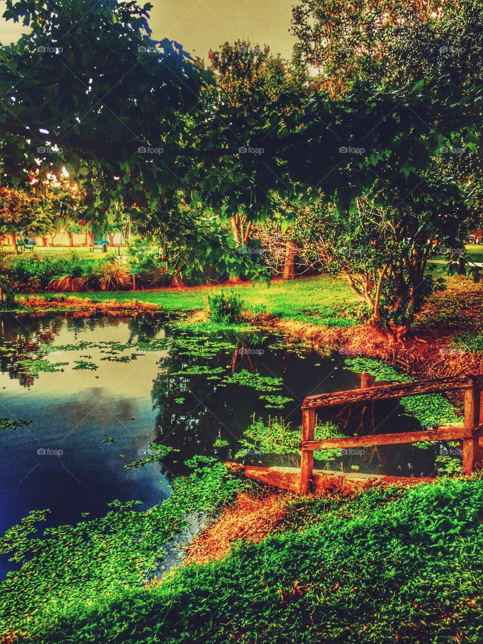Pond at sunset in the park in St Petersburg FL