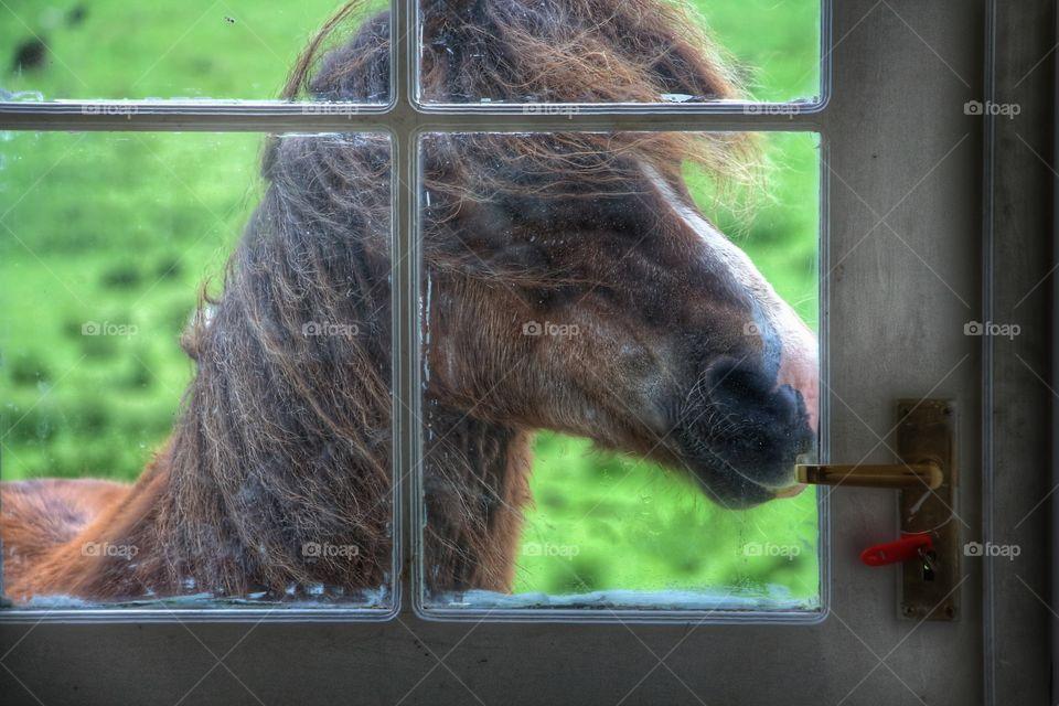 Horse at the door