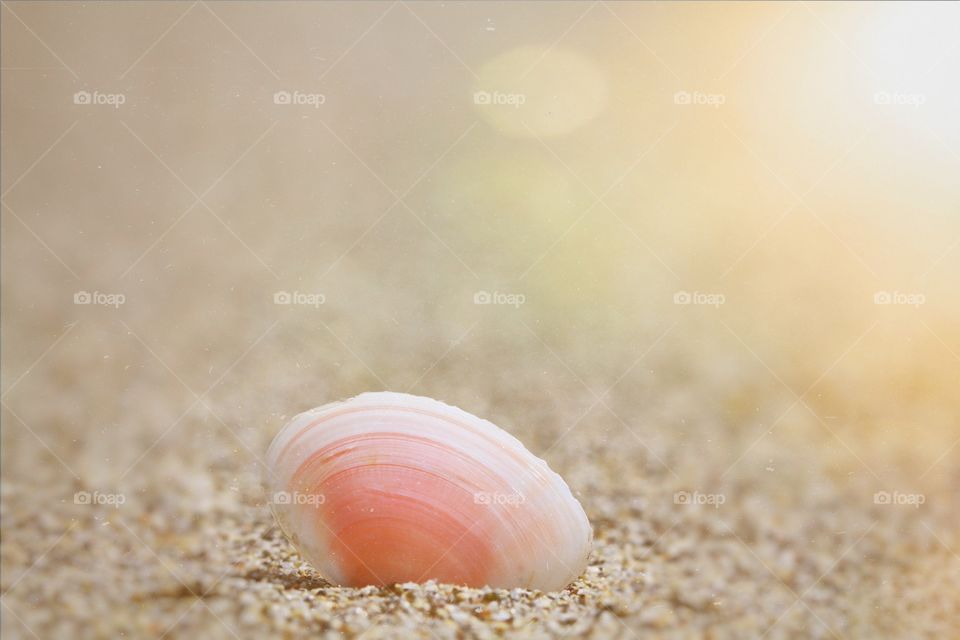 A delicate pink sea shell resting on a sandy beach with the warm glow of the morning sun behind