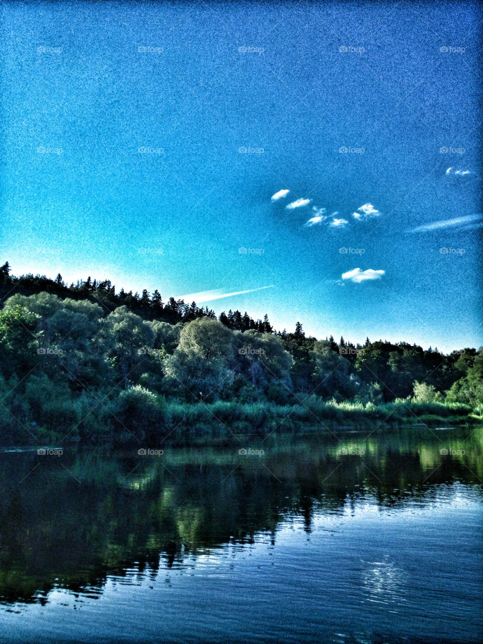 Nature. Summertime in Northern Europe.