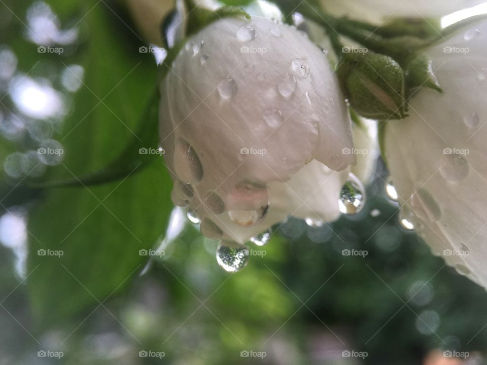 Rain Bells
