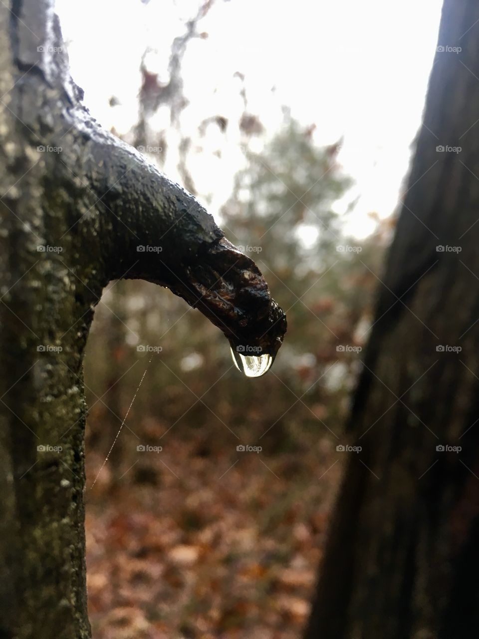 Raindrop clinging to a sprig