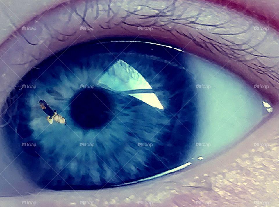 bird in a baby blue eye