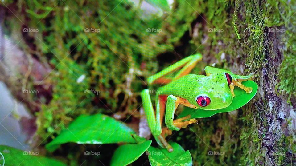 Frog, Nature, Leaf, Amphibian, Rainforest