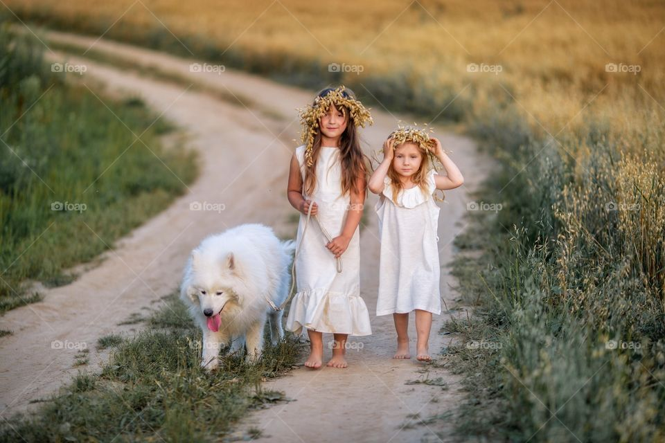 Little sisters with Samoyed dog in rye field at summer evening