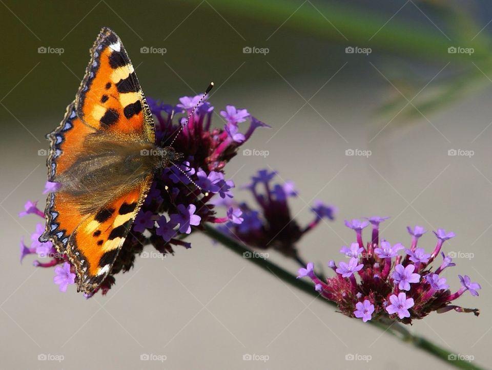 landscape flower summer butterfly by cekari