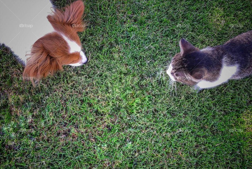 Meeting in the Yard