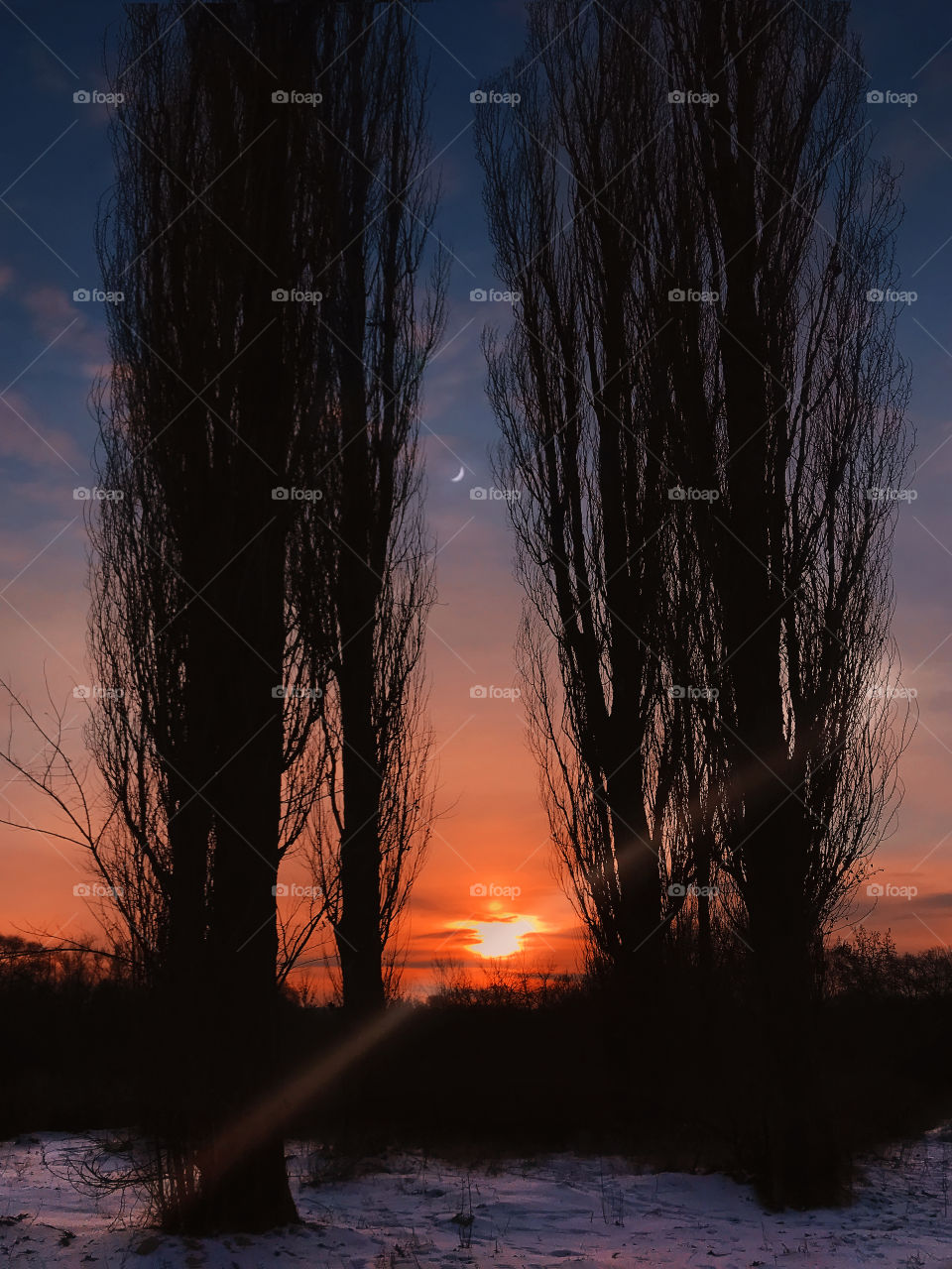 Silhouette of trees on beautiful sunset background in winter