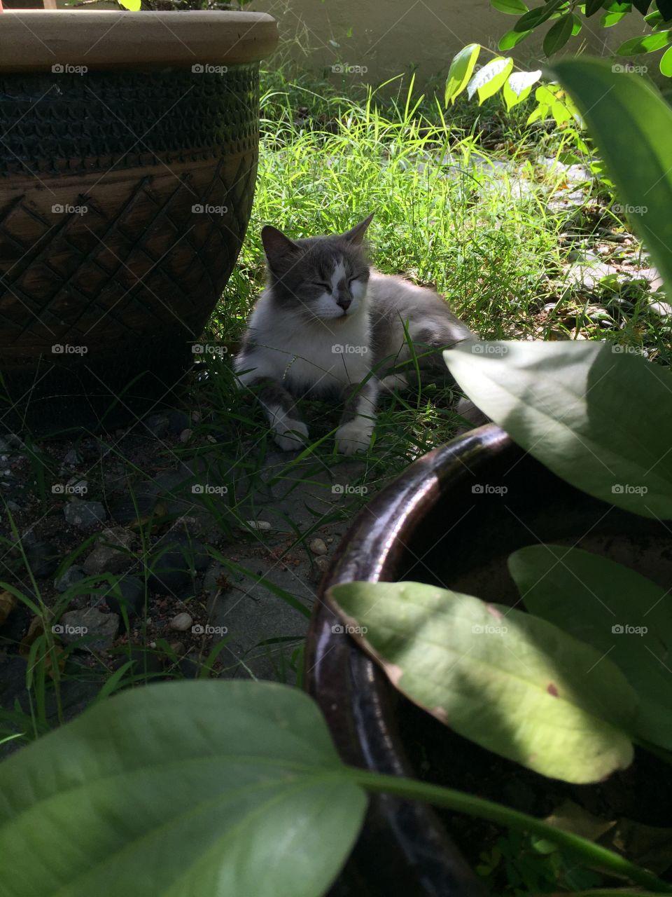 Cat enjoying comfortable shade. Best of cat
