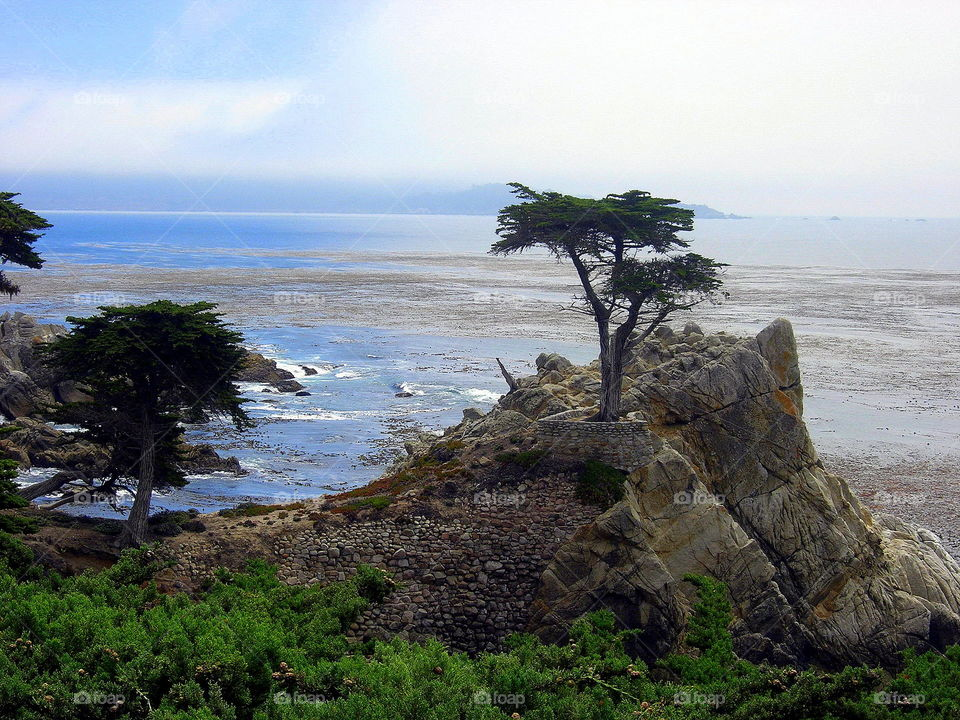pine on the rock at the sea cliff