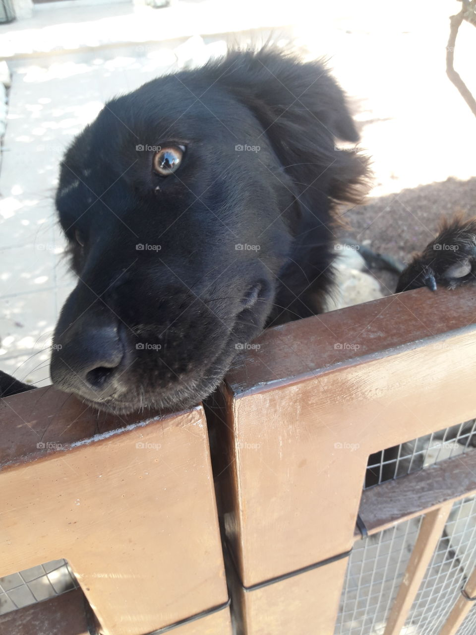 one so cute black dog when i see in the one another house