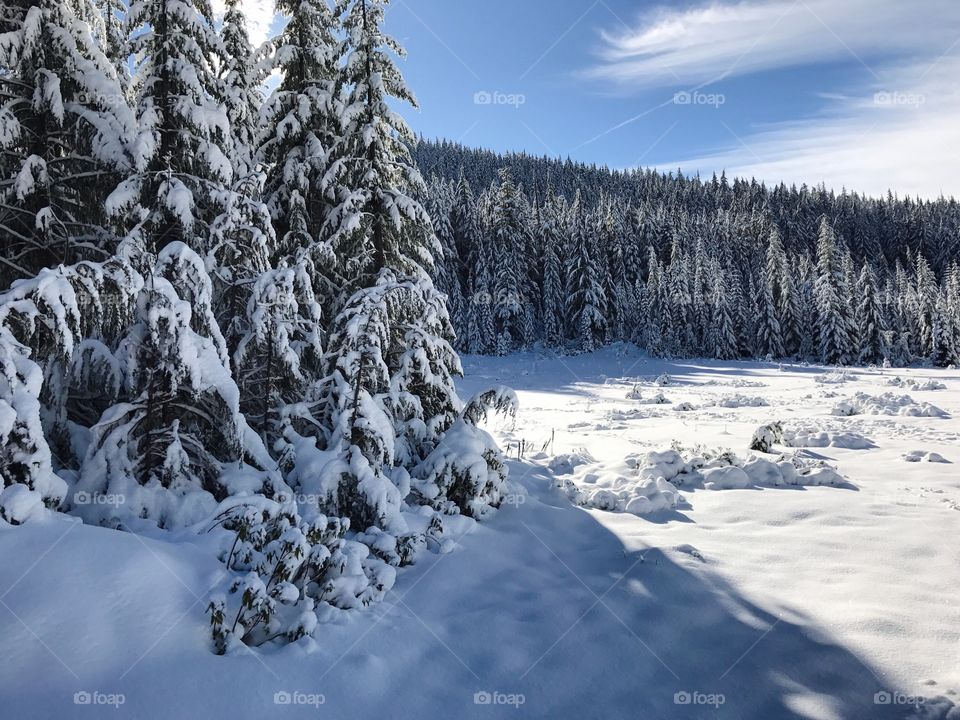 A mountain meadow in the Willamette National Forest in Western Oregon buried under a thick layer of snow and surrounded by hills and snow covered trees on a winter day.