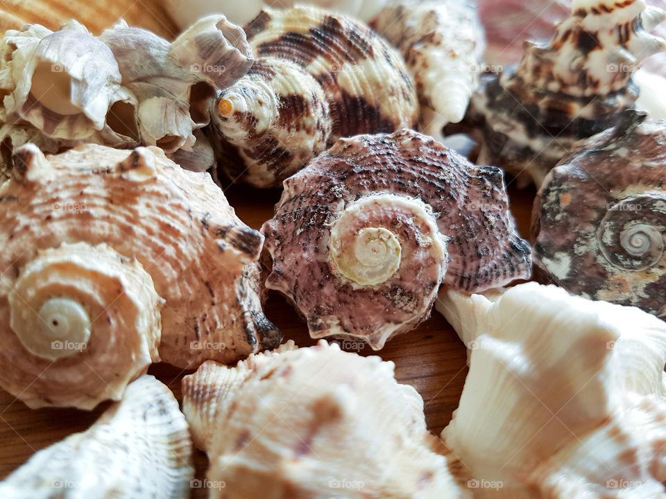 Full frame of conch shells