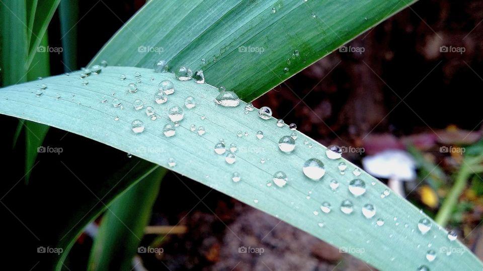 Капли дождя