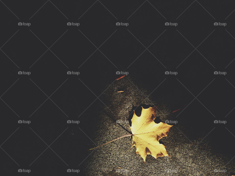 Yellow Leaf Laying in Sunlight