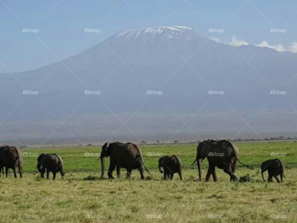 captured both elaphant and mount kenya