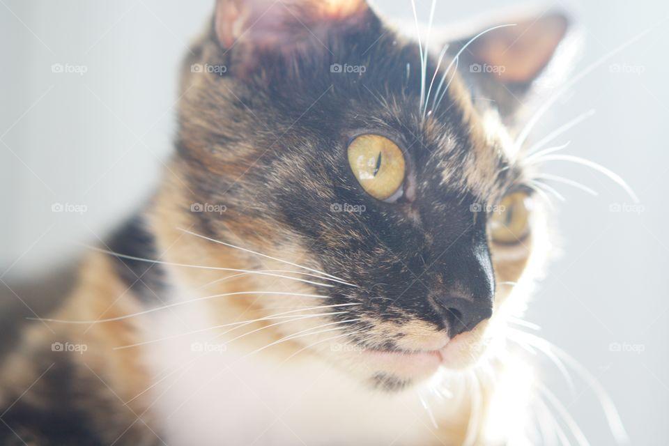 Cat, Cute, Pet, Eye, Portrait