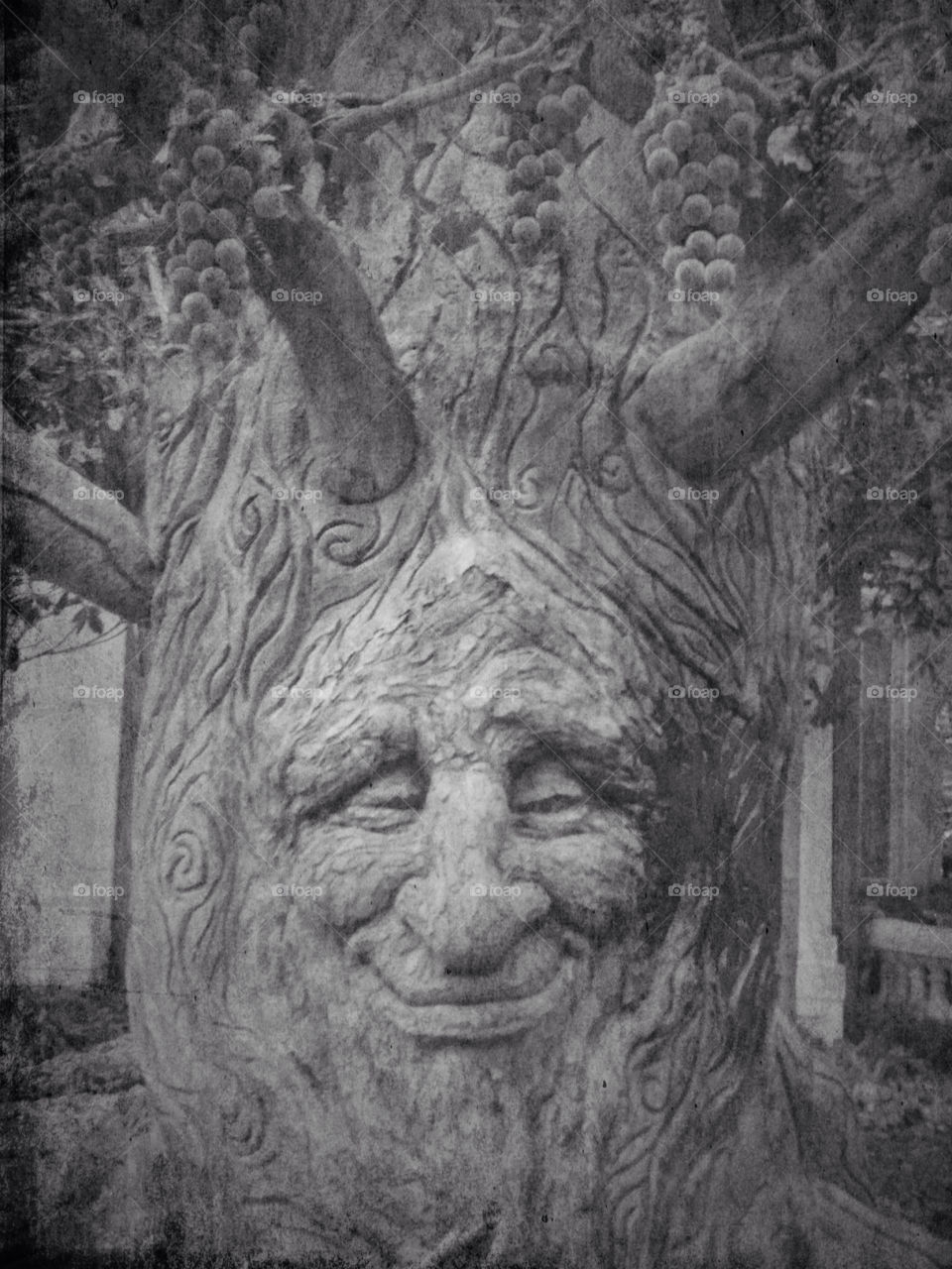 face tree smile tree of life by snook911