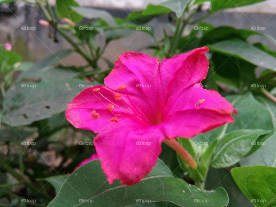 flower 2017/09/28  030  #আমার_চোখে #আমার_গ্রাম #nature #flower #eukaryota #plantae #angiosperms #eudicots