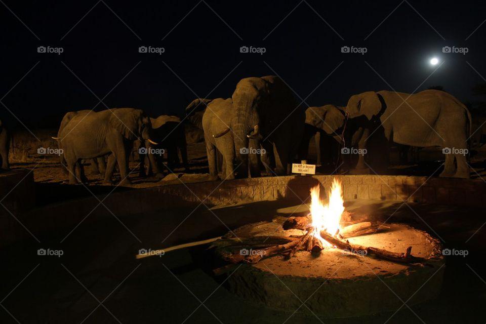Elephants by campfire