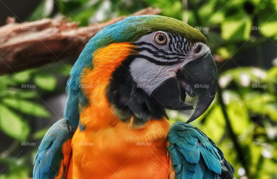 Blue And Yellow Macaw. Colorful Bird Of Paradise
