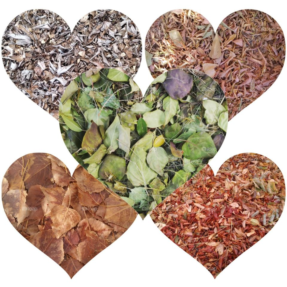A collage of leaf photos that are heart shaped