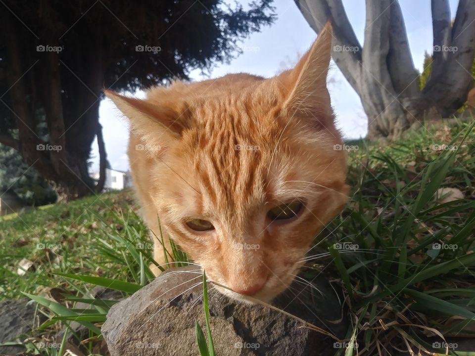 An orange cat named Butterbean enjoying a sunny day 💞